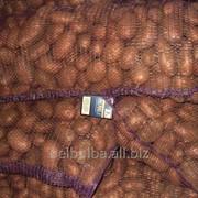 Картофель вид Астерикс первой репродукции фото