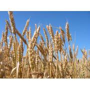 Услуги консалтинговые в области сельского хозяйства фото