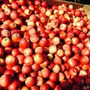 Яблоки свежие Gala фото