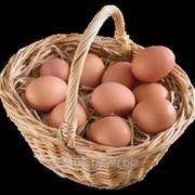Яйцо куриное (белое,цветное) фото