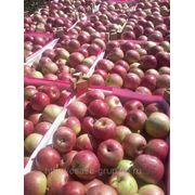 Продам яблоко из Молдавии фото
