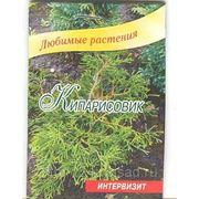 Кипарисовик Chamaecyparis семена 5 шт фото