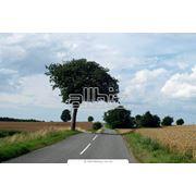 Строительство дорог с применением дорзина фото