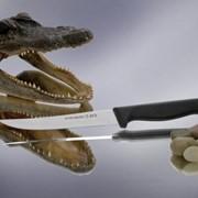 1102 T-REX Hatamoto нож универсальный, 120мм фото