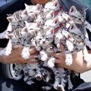 Продажа животных фото