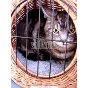 Ветеринарное лечение фото