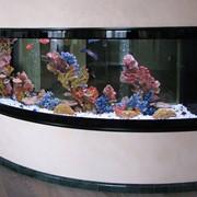 Обслуживание аквариума в Киеве и пригороде фото