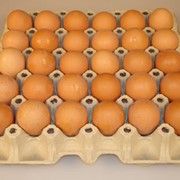 Яйцо куриное в ассортименте фото