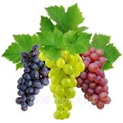 Виноград всех сортов фото