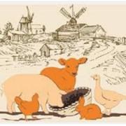 БМВД для свиней фото