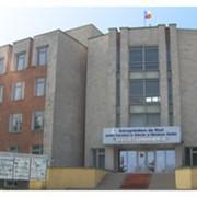 Свиноводство в Молдове фото