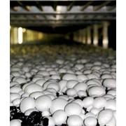 Микроклимат грибных ферм фото