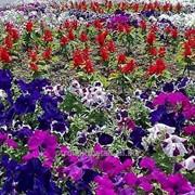 Устройство цветников и клумб №48 фото