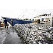Отгрузка с/м рыба на Камчатке. фото