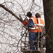 Кронирование, удаление деревьев фото