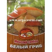 Мицелий Белых грибов. Купить мицелий Белых грибов. Мицелий грибов почтой фото