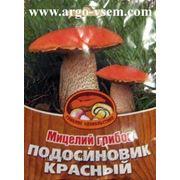 Мицелий Подосиновика. Купить мицелий Подосиновика. Мицелий грибов почтой фото