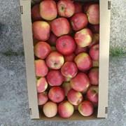 Яблоко свежее (РБ) фото