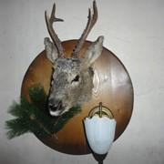 Голова косули-светильник. фото
