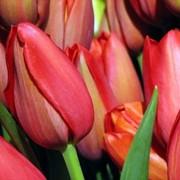 Живые цветы фото