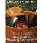 Мицелий Лисички. Купить мицелий Лисичек. Мицелий грибов почтой фото