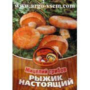 Мицелий Рыжика. Купить мицелий Рыжика. Мицелий грибов почтой фото