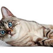 Корм для кошек FELINE HEALTH NUTRITION WET фото