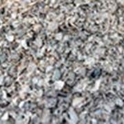 Морская ракушка кормовая фото