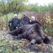 Охота на медведя фото