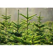 Разработка систем экологического менеджмента ISO 14001 фото