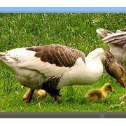 Проектирование монтаж пуск птицеубойных цехов фото
