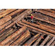 Деревянные элементы домов фото