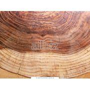 Древесина твердых пород дерева - дуб ясень бук фото