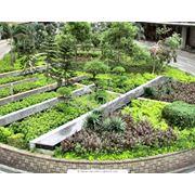 Озеленение территорий ландшафтный дизайн фото