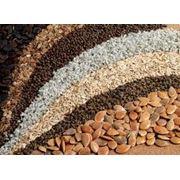 Семена и посевной материал овощей цветов зерновых трав фото