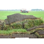 Газоны рулонные травяные покрытия фото