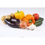 Семена овощей в ассортименте фото