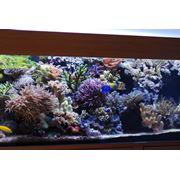 Солоноводный аквариум фото