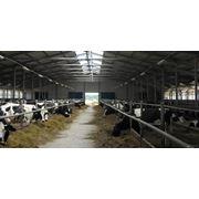 Проектирование зданий сельскохозяйственного производства фото