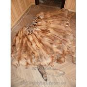 Мех, шкурки лисы рыжей. Выделанные. фото