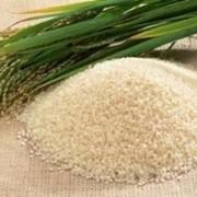 Приморский рис от производителя. фото