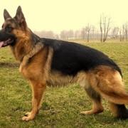 Исследования ветеринарные фото