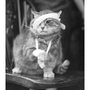 Корректировка лечения животных по ситуации фото