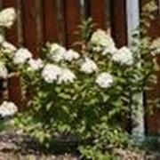 Высадка однолетних цветов фото