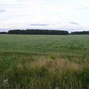 Участки земли для фермерского хозяйства фото