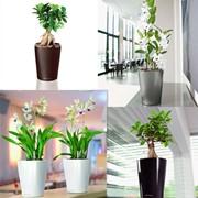Горшки для растений с автополивом LECHUZA DELTINI (Дэльтини) - новинка 2011 фото
