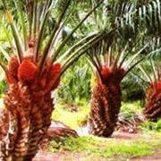 Пальмовый олеин РДО, для фритюра, жарки, производства маргаринов, спредов, кондитерских изделий. фото