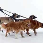 Услуги по выгулу домашних животных фото