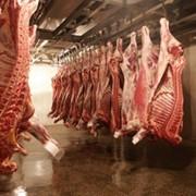 Мясо, мясопродукты (баранина, говядина, конина - всё халал), молоко и молочные продукты фото