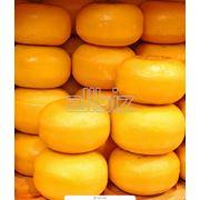 Твердый сыр голландского типа фото